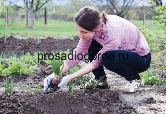 садить огород на вербной неделе