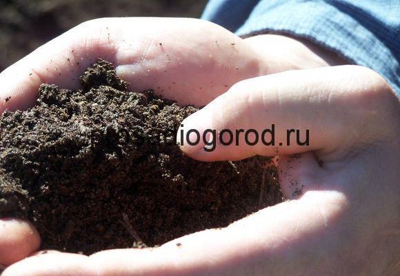 использование помета удобрения