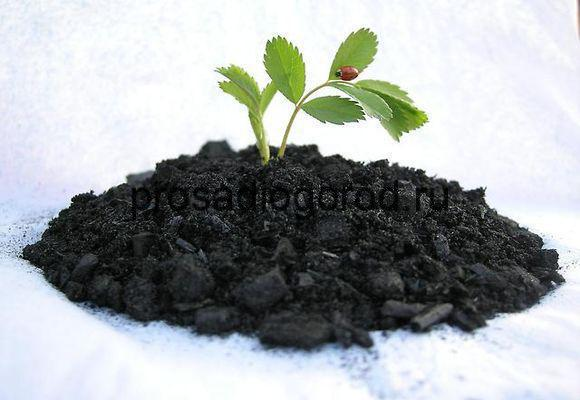 древесный уголь и зола как удобрение для огорода