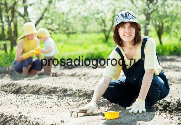 работы в огороде весной