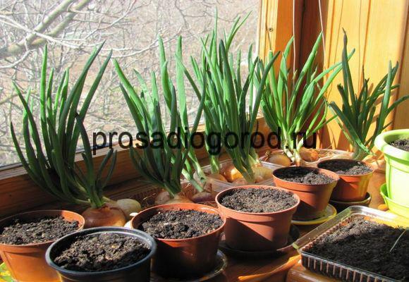 огород на окне своими руками