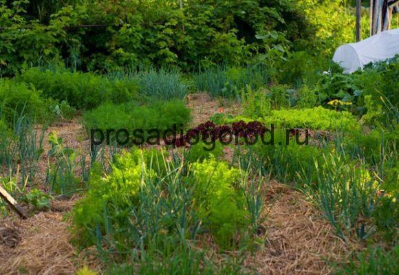 посадка огорода под солому
