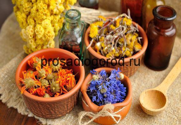 лекарственные растения на огороде