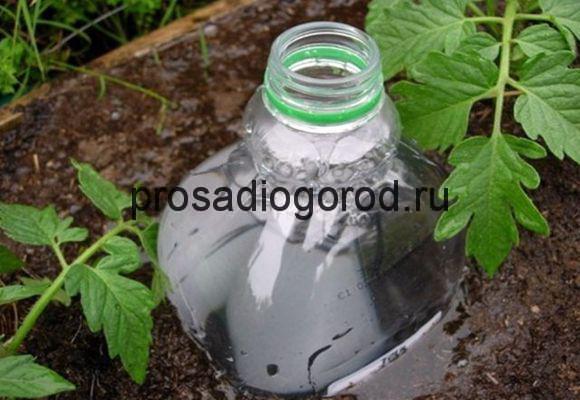 полив огорода из пластиковых бутылок