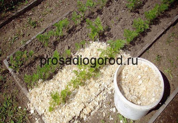 использование опилок на огороде