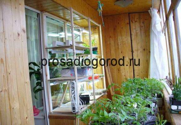 сделать огород на балконе