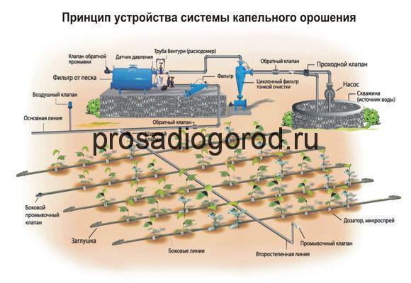 схема капельного полива для огорода