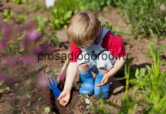 посадка огорода для детей