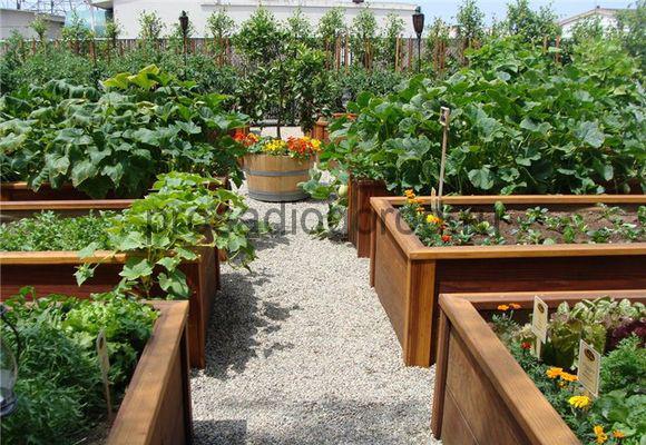 как правильно спланировать огород