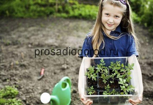 растения для детского огорода