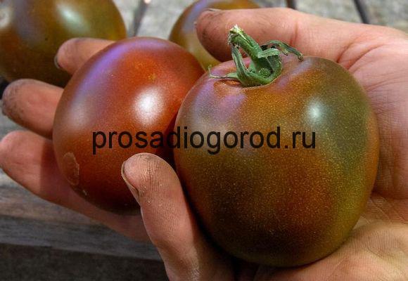 помидоры черный принц