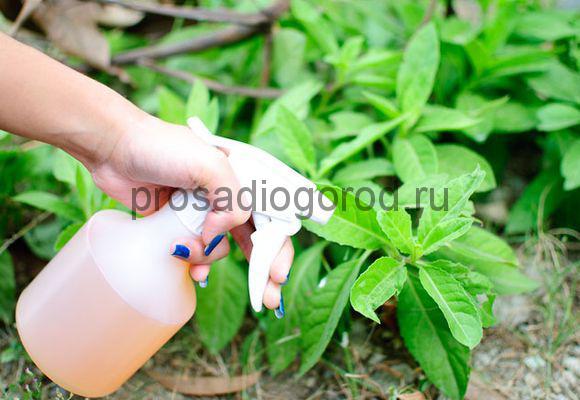 жидкий биогумус удобрение на огороде