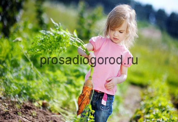 сбор урожая на детском огороде