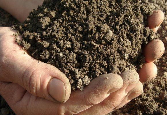 дезинфекция почвы на огроде