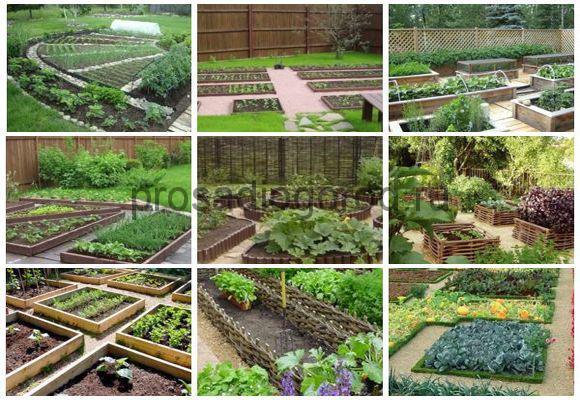 планировка огорода схема посадки овощей