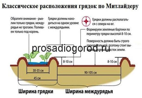 схема узких грядок по методу митлайдера