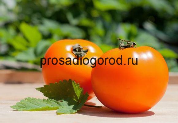 помидоры хурма описание сорта