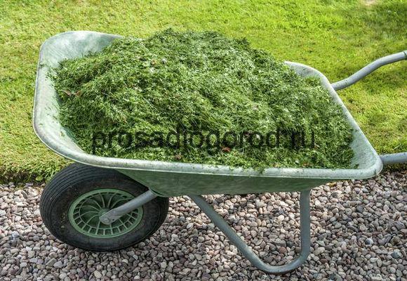 компост из травы на огороде