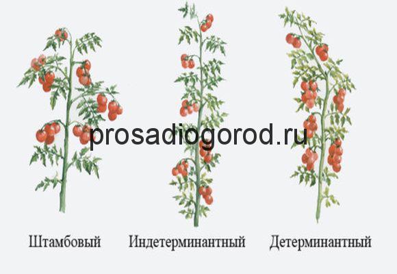 формирование разных сортов помидоров в грунте