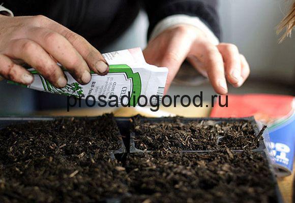 правильный посев семян на рассаду