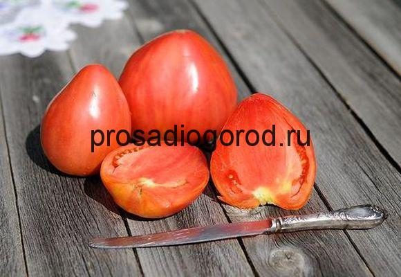 помидоры бычье сердце описание