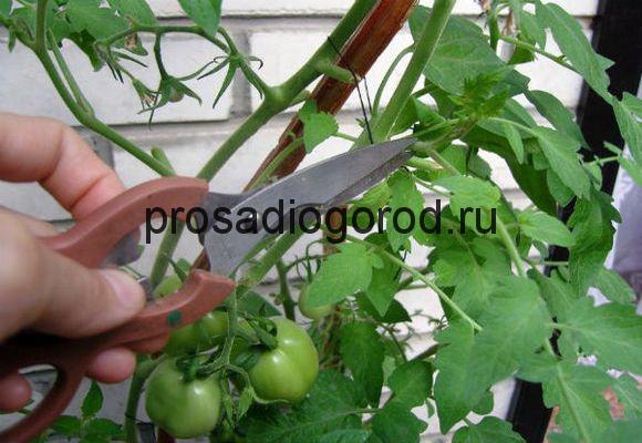 как правильно обрезать томаты в теплице