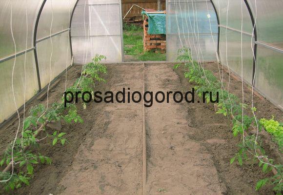 подготовка теплицы для томатов