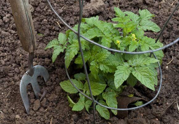подготовка грунта для томатов