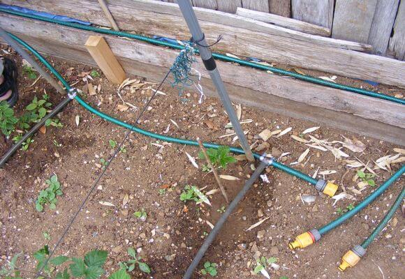 полив малины в грунте