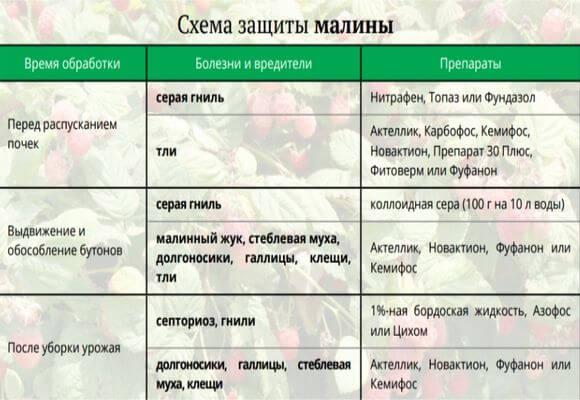 схема защиты ягоды