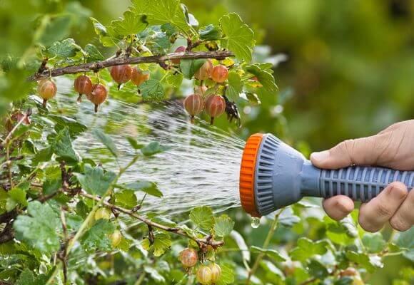 полив кустов