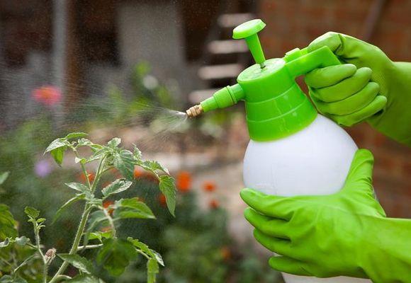 полив кустарников