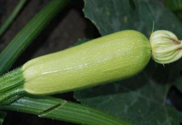 урожай овоща