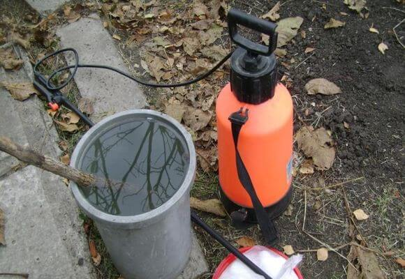 Подготовка к обработке деревьев