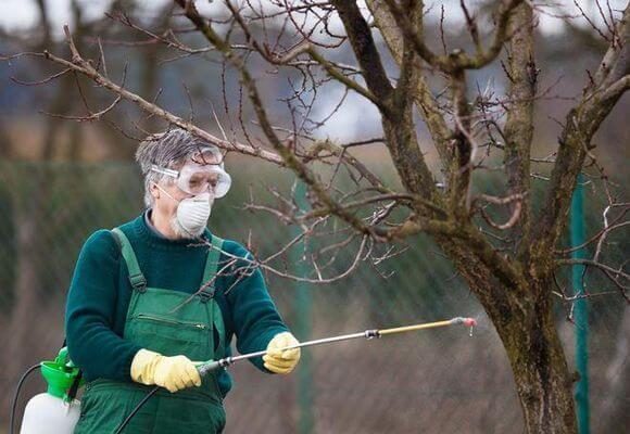 опрыскивает дерево