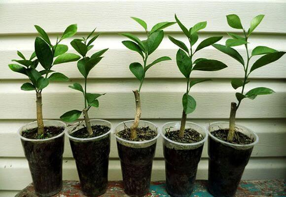 молодые растения в горшке
