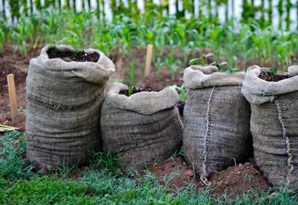 посадка семян в мешки