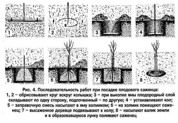 правила посадки дерева