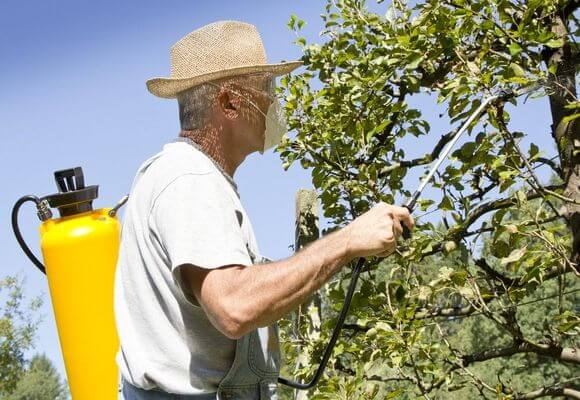 Обработка плодового дерева