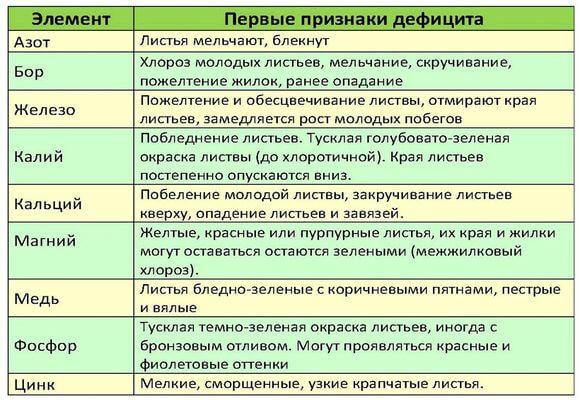 таблица подкормки яблони