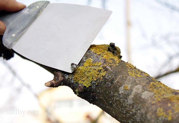 удаление мха с дерева