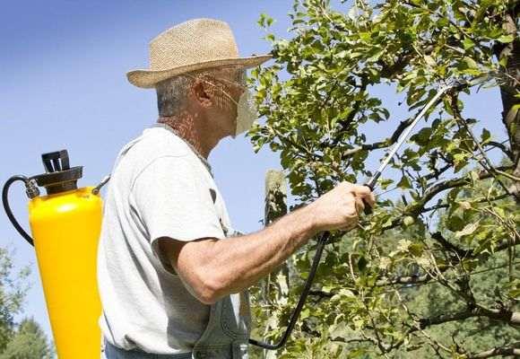 Распыление для защиты дерева