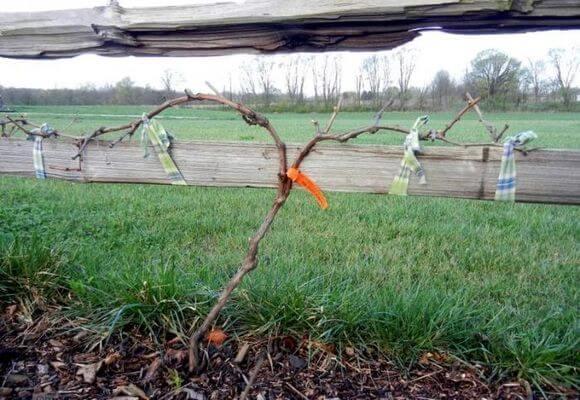 деревянная опора для винограда