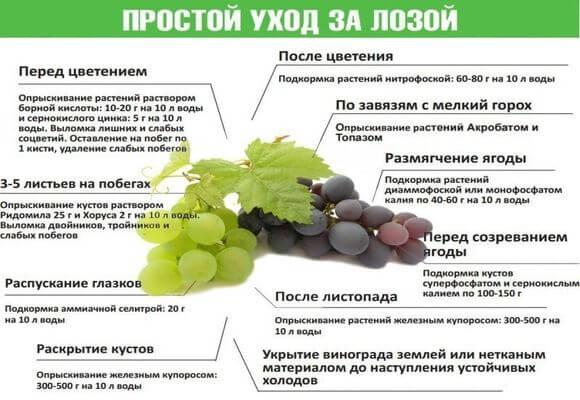 таблица удобрения винограда