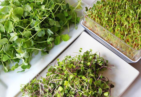 фото микрозелени
