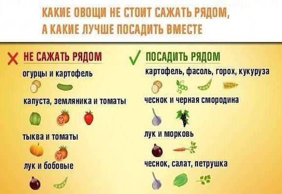 таблица совместимых овощей