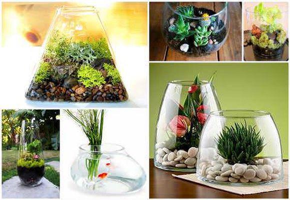 модные растения