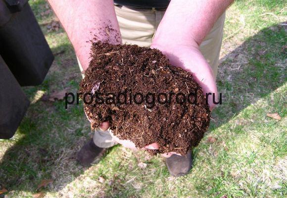 использование помета на огороде