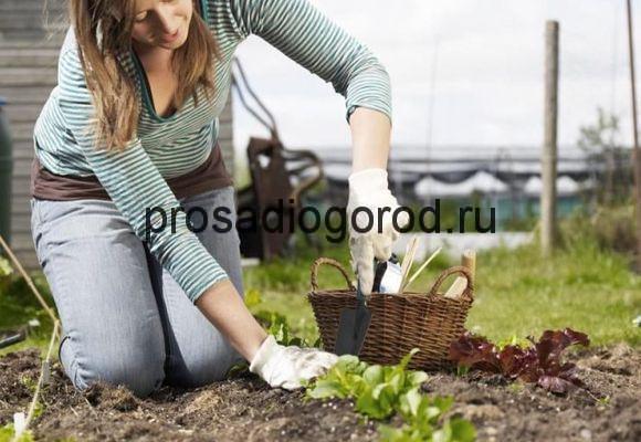 красная горка работа на огороде