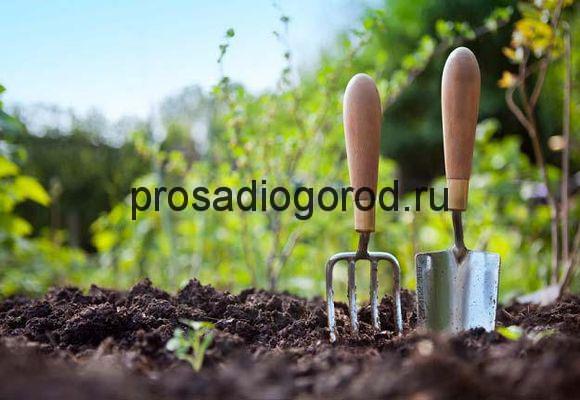 работы в огороде в апреле
